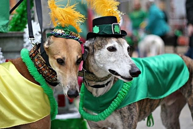 St. Patrick parade dogs